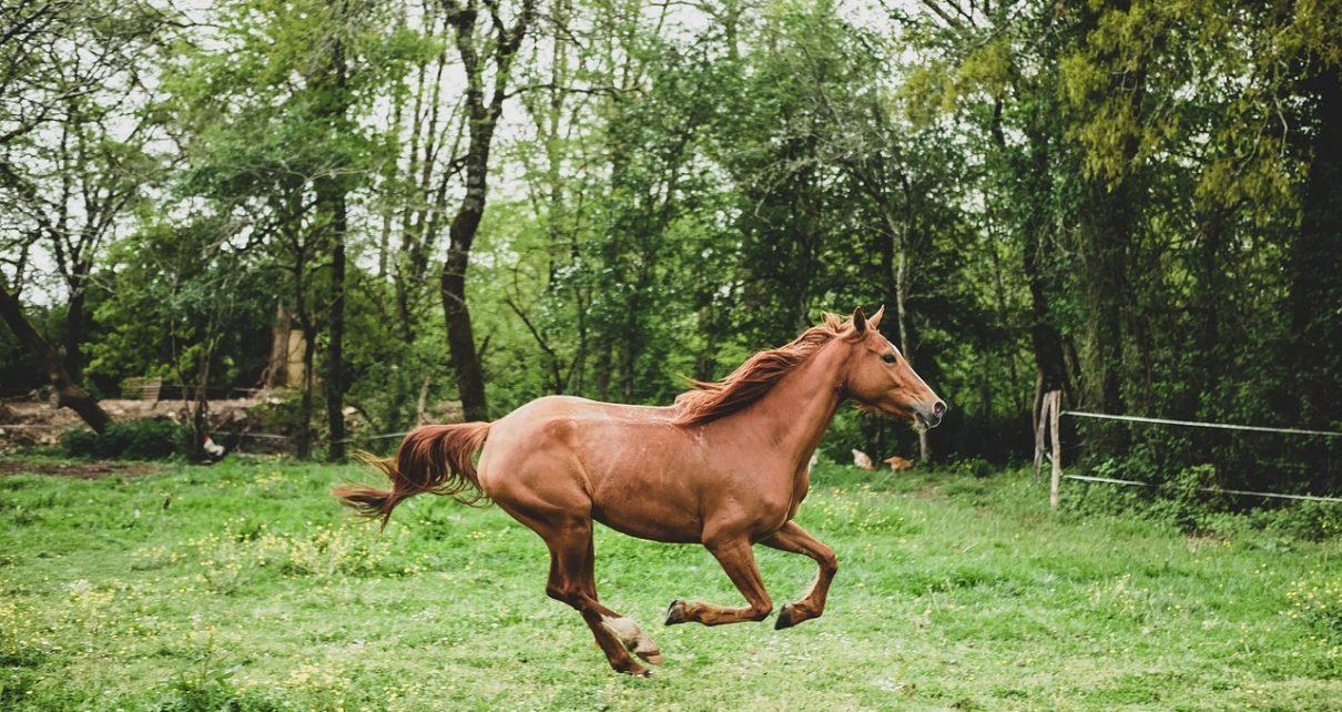 Miejsce do ujeżdżania koni