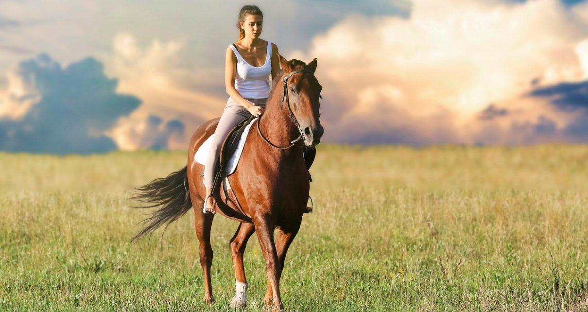 Wygoda prowadzenia hodowli koni